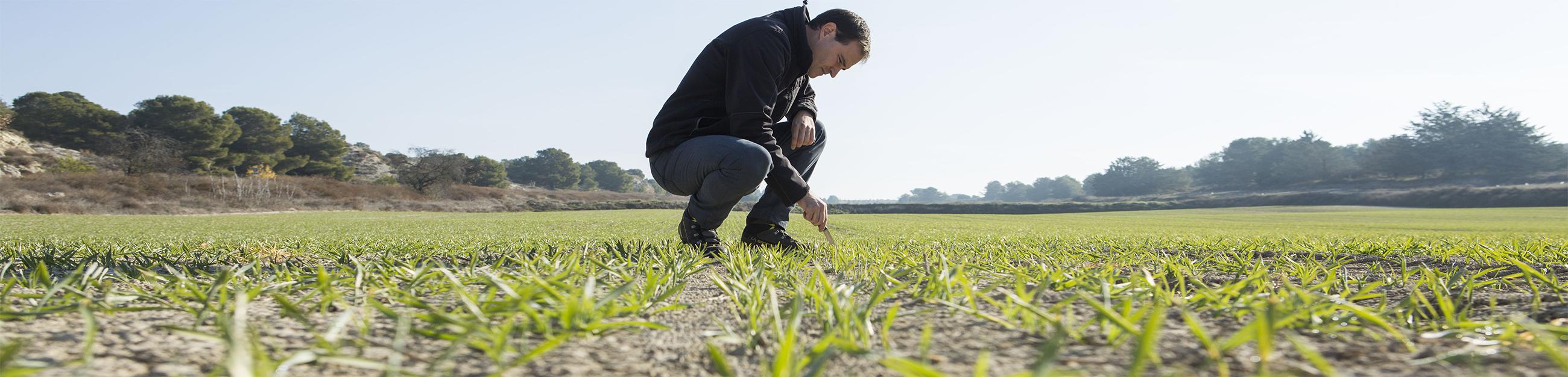 suagro servicios agricolas